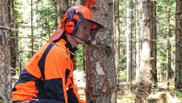 Kärntens Wälder müssen jetzt klimafit gemacht werden. (Bild: Kärntner Waldpflegeverein)