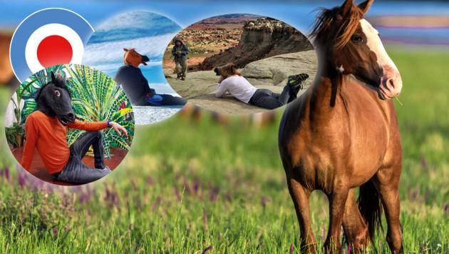 (Bild: stock.adobe.com, instagram.com/horsemasklife, City4U-Grafik)