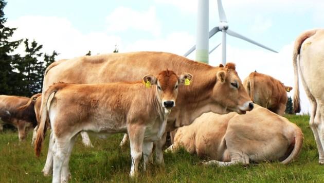 (Bild: IG Windkraft)