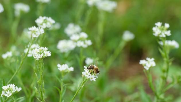 Besonders Insekten sind vom massiven Artensterben betroffen. (Bild: APA/dpa/Gregor Fischer)