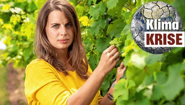 """Arbeitsplatz Weingarten: Winzerin Christina Hugl (27) auf Qualitätskontrolle in den Rieden (Bild: Imre Antal, """"Krone"""", krone.at-Grafik)"""