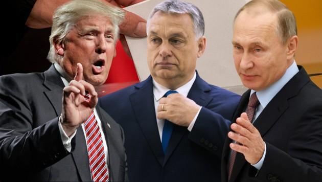 (Bild: AFP, AP, APA/dpa/Michael Kappeler, krone.at-Grafik)
