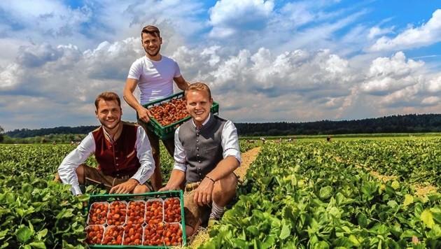 Bei der Ernte am Feld: Die junge Generation der Familie Reichenspurner. (Bild: Reichenspurner Hof)