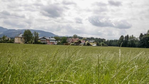 Auf dieser Wiese an der Berchtesgadener Straße (Gneis) entstehen bis 2023 insgesamt 230 Wohnungen, ein Kindergarten, Cafes und Nahversorger. (Bild: Tschepp Markus)