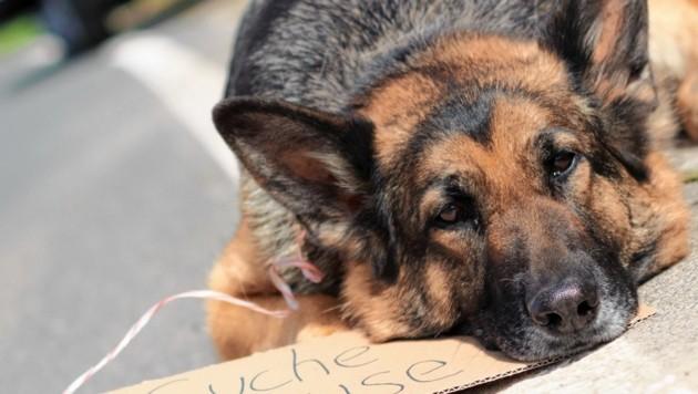 Ein am Straßenrand zurückgelassenes Haustier ist in den Sommermonaten leider keine Seltenheit. Wenn es Glück hat, wird es gefunden. (Bild: ©juefraphoto - stock.adobe.com)