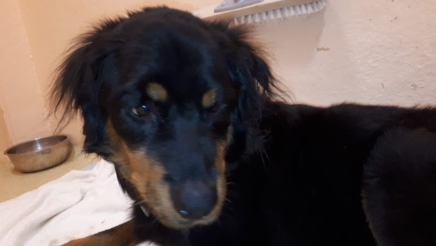 Mischlingshund Lucy (Bild: Pfotenhilfe)