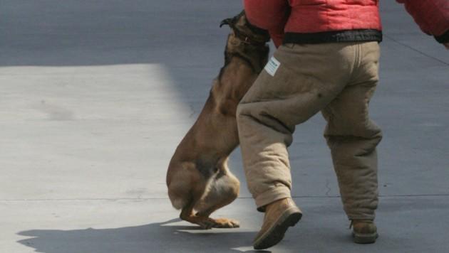 Ohne Training hat man gegen einen großen Hund keine Chance (Bild: KRONEN ZEITUNG)