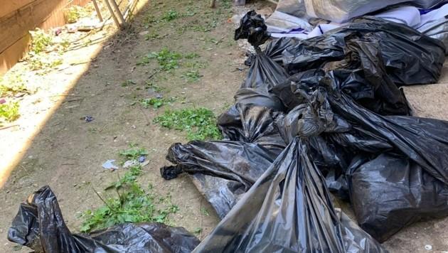 Zahlreiche tote Hunde hat die Frau in Plastiksäcke verpackt. (Bild: Claudia Fischer)