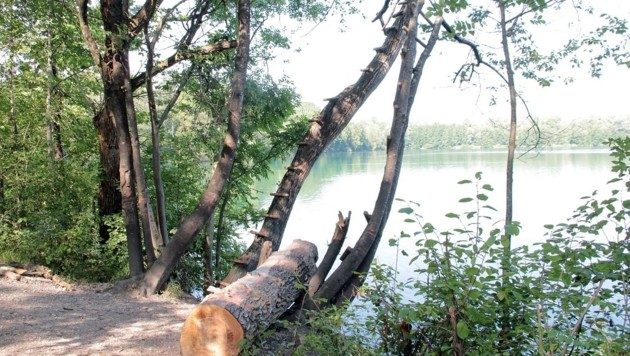 Der Bub spielte mit einem Seil am Ufer (Bild: APA/dpa/Josef Reisner)