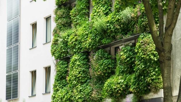 Neben grünen Fassaden kühlen auch Bäume die Städte ab. (Bild: Elisabeth Gruchmann, Grünstattgrau)