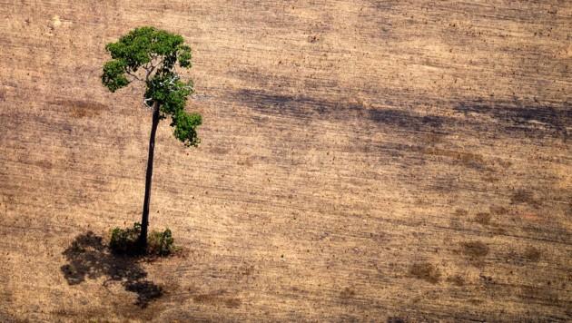 Für den Anbau von Soja, Kaffee und anderen Produkten für den Import in die EU ist zuletzt im Schnitt jährlich Tropenwald auf einer Gesamtfläche von etwa der vierfachen Größe des Bodensees abgeholzt worden. (Bild: AFP)