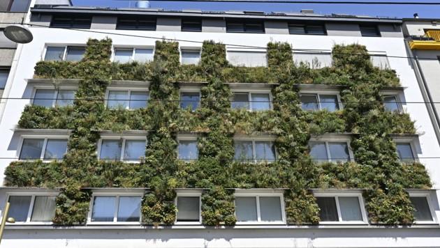 Fassadenbegrünung an einem Wohnhaus in Wien-Ottakring (Bild: APA/HANS PUNZ)