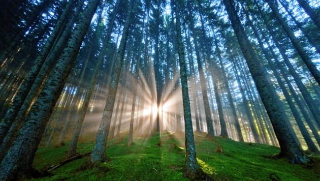Wälder und Waldrandlagen nutzen, so der Vorschlag der Sozialpartner