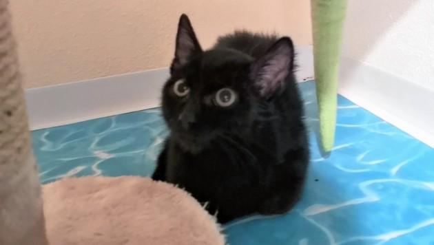Das Katzerl ist mit wenigen Wochen noch ein Baby - und so schwer verletzt (Bild: Luna Katzen in Not)