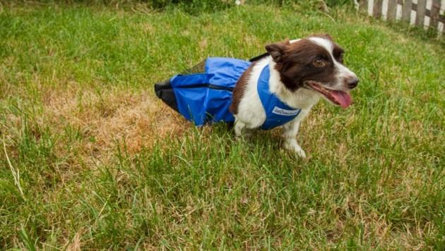 Der Rutschsack schützt beim Tollen und Rennen. (Bild: Pfotenhilfe)