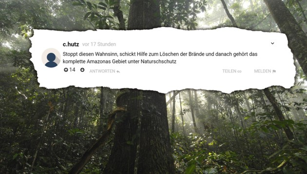 (Bild: krone.at, krone.at-Grafik, Markus Mauthe/Greenpeace)