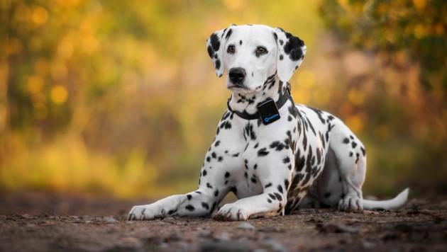 GPS-Tracking für Hunde und Katzen hat in puncto Bekanntheit noch Aufholbedarf.