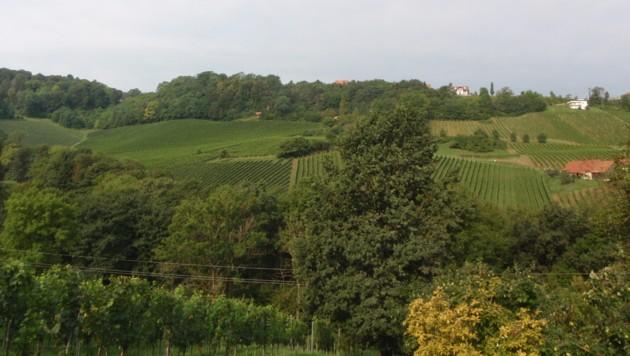 Hier soll Bio-Wein angebaut werden - der Wald muss weg (Bild: Wolfgang Walther)
