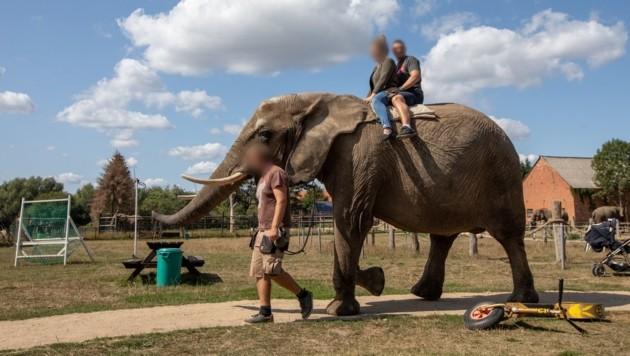 Nicht irgendwo in Südostasien, sondern am Elefantenhof Platschow in Deutschland. (Bild: Vier Pfoten/Aaron Gekoski)