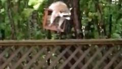 Wie ein Klammeraffe hält sich das putzige Tierchen an der Futterstation fest und trotzt dem Hurrikan. (Bild: kameraone)