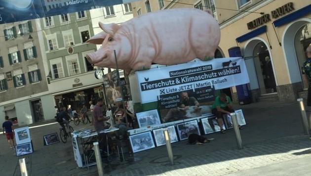 Von Montagvormittag bis 17 Uhr waren die Aktivisten der Liste Jetzt auf dem Platzl. (Bild: Stadt Salzburg)