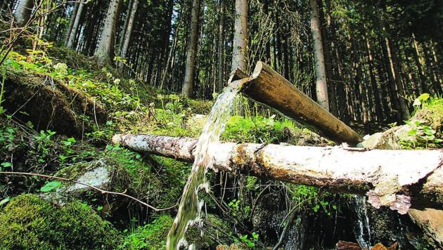 Wasser im Wald (Bild: KRONEN ZEITUNG/Jürgen Radspieler)