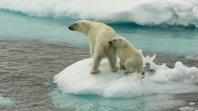 (Bild: © Larissa Beumer / Greenpeace)