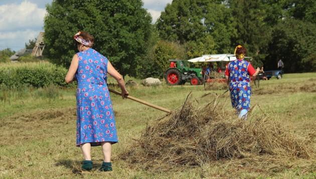 Heu wenden ist nur eine der unzähligen Aufgaben, die auf einem Bauernhof anfallen (Symbolbild). (Bild: ©Regina - stock.adobe.com)
