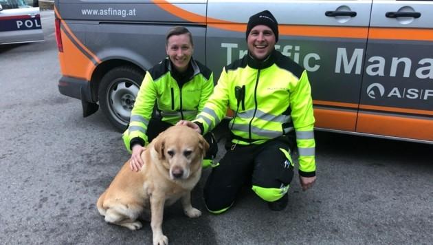 Auch dieser Hund wurde von den Asfinag-Mitarbeitern gerettet (Bild: Asfinag)