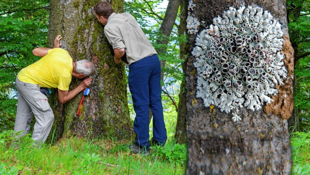 (Bild: Roman Türk, Umweltbundesamt/Wolfgang Simlinger, krone.at-Grafik)