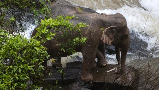 Wildhüter konnten zwei Elefanten retten. (Bild: APA/AFP/Thai News Pix/Panupong Changchai)