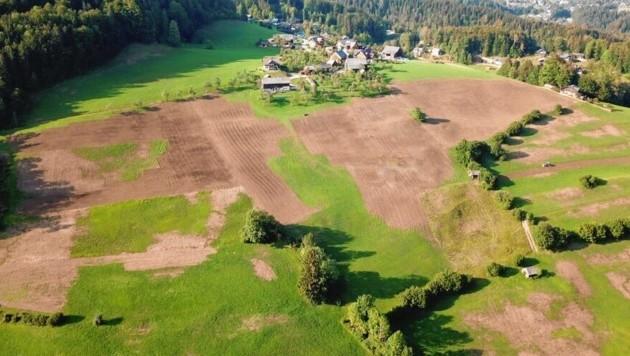 Die riesigen braunen Flecken waren einst saftige Wiesen, bevor die Engerlinge sie befallen haben. (Bild: Johann Gigler)