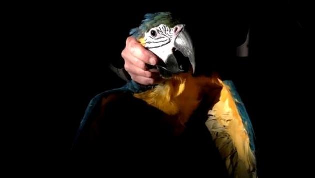 Der wunderschön bunte Vogel konnte gerettet werden. (Bild: Feuerwehr Ferlach)