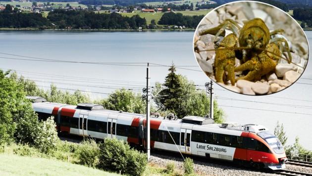 Damit haben die Bundesbahnen nicht gerechnet: Steinkrebse verhindern eine Deponie (Bild: ÖBB/Horak, www.picturedesk.com/Aichinger)