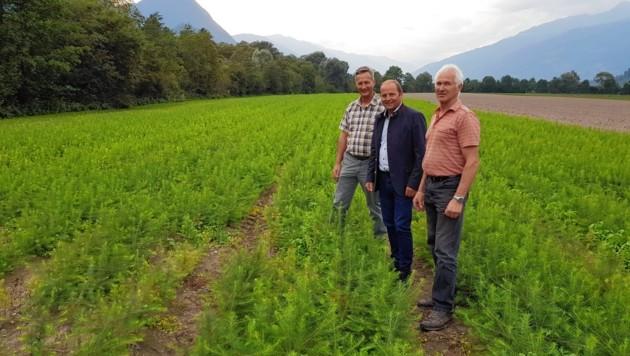 Landesforstdirektor Josef Fuchs, Landesvize Josef Geisler und der Chef vom Landesforstgarten Anton Schett beobachten den Fortschritt. (Bild: Land Tirol)