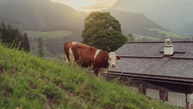 Die drittgrößte Molkerei Österreichs ist nun wieder in heimischem Besitz. (Symbolbild) (Bild: Kuba Wasilewski, SalzburgMilch)