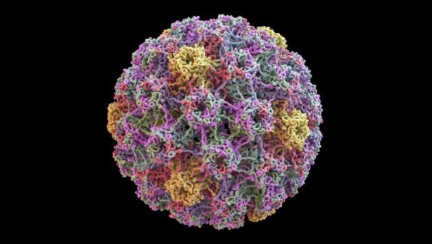 Humaner Papillomavirus (HPV). (Bild: Yabusaka/stock.adobe.com)