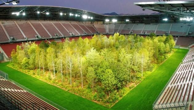 Kommen For Forest Baume Nach Niederosterreich Krone At