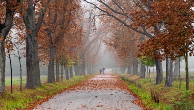 Herbst- und Allerheiligenstimmung: Frostig und nass wird das Wetter in der Steiermark (Bild: Brenek Malena)