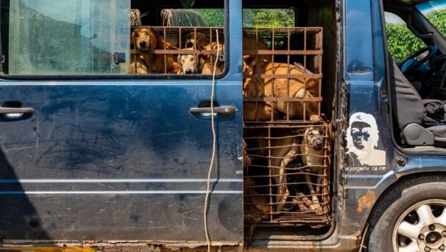 Die Hunde werden eingefangen oder von ihren Besitzern gegen Töpfe und Pfannen eingetauscht. (Bild: Vier Pfoten)