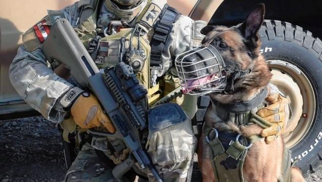 Ein Belgischer Schäferhund des Jagdkommandos (Bild: Bundesheer/Pusch)