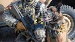 Ein Belgischer Schäferhund vom Jagdkommando (Bild: Bundesheer/Pusch)
