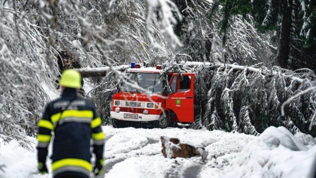 Im Mölltal stürzte ein Baum auf das Fahrzeug der FF Stall. (Bild: Peter Maier)