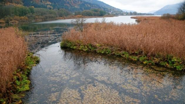 Das Bleistätter Moor ist ein beliebtes Naherholungsgebiet. (Bild: Rojsek-Wiedergut Uta)