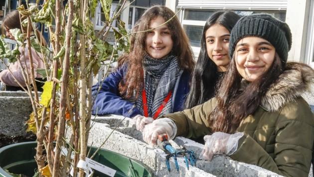 Zehra Savas, Tasnim Aiid, Esma Cekic (v.l.) beim Einpflanzen. (Bild: Tschepp Markus)