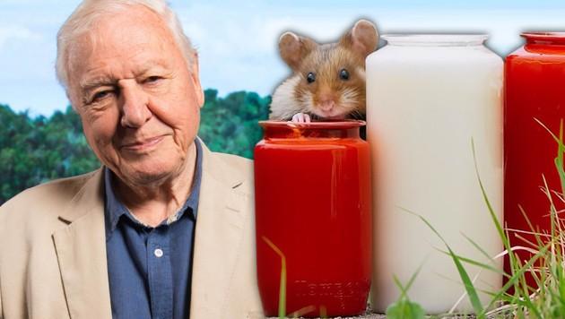 (Bild: BBC, www.picturedes.com, krone.at-Grafik)