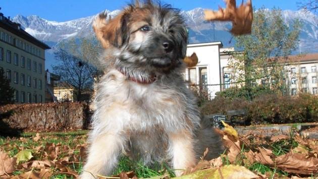 Ein Hund wurde in Niedernsill zum Lebensretter. (Bild: Bierbaumer)