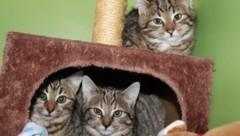 Viele arme Tiere in Heimen brauchen unsere Hilfe! (Bild: Pfotenhilfe)