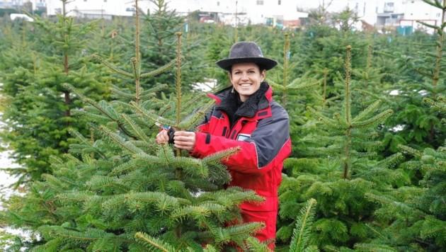 """Martina Lienhart aus Unterlamm (44) ist eine von 82 Produzenten, die die Qualitätsmarke """"Steirischer Christbaum"""" führen darf. (Bild: Sepp Pail)"""
