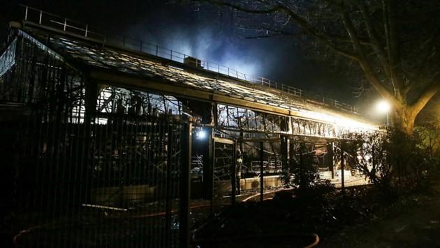 Das Affenhaus des Krefelder Zoos wurde bei dem Brand vollständig zerstört. (Bild: AFP/dpa/David Young)